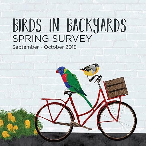 Birds in Backyards - Spring Survey