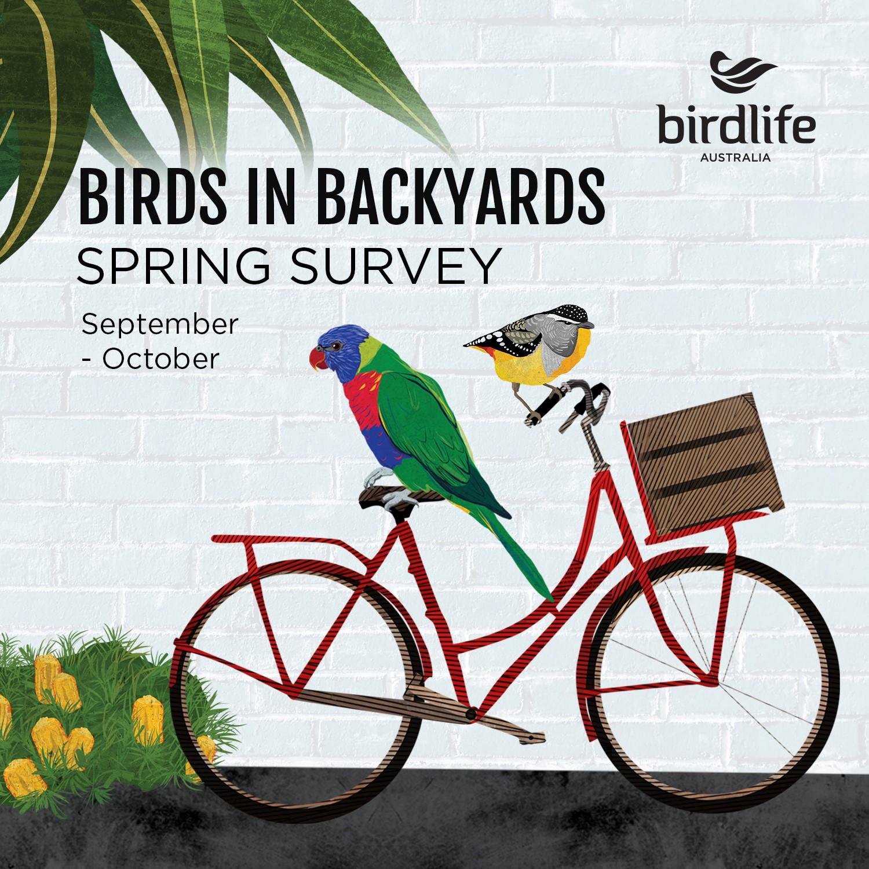 Birds in Backyards Spring Survey